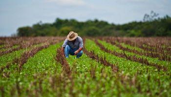 Retos y oportunidades de la agricultura en América Latina