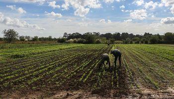 Agricultura familiar: Federación Agraria presentó 15 propuestas para potenciar el sector