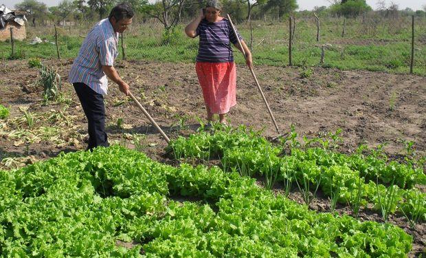 El 69 por ciento de los productores argentinos son agricultores familiares.