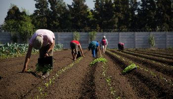 """Contra la """"pobreza rural"""", el Gobierno creó un programa para la Agricultura Familiar, Campesina e Indígena"""