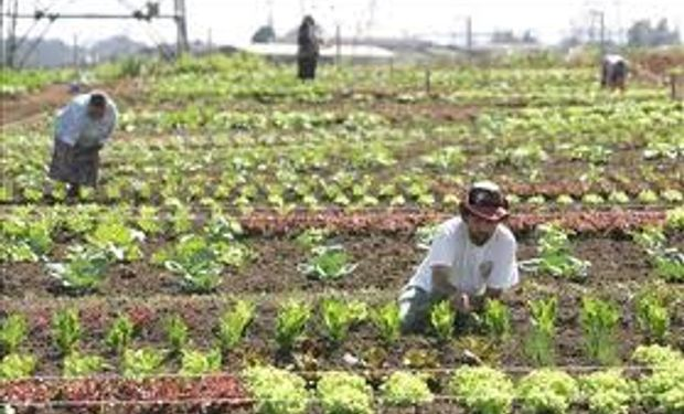 El potencial de la pequeña agricultura en la región