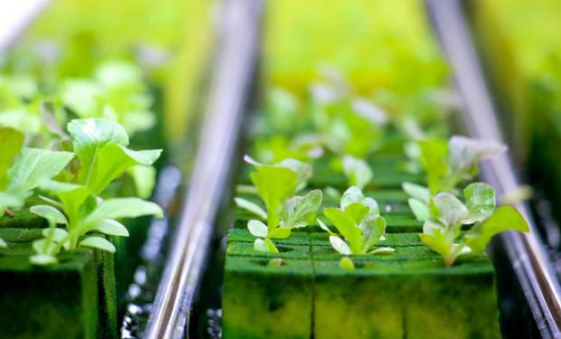 """Adrian Percy trabaja sobre 125 nuevas tecnologías para el agro: """"El actual ritmo de avance de la agricultura no es sostenible"""""""
