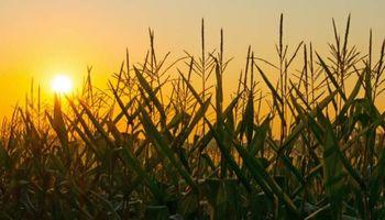 Agricultura post granaria: incorporar conocimientos para ganar competitividad