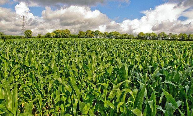 Se realizarán exposiciones de posters de trabajos relacionados a la nutrición de cultivos y los sistemas de producción en la región.