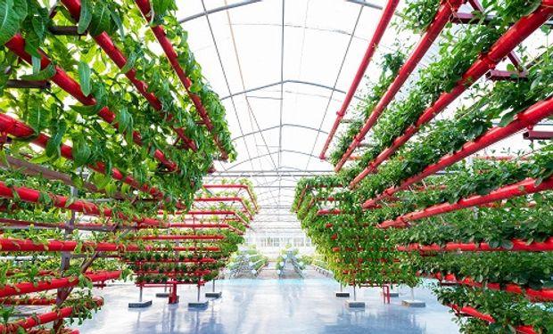 Programa de tecnología en alimentos: extienden la convocatoria para acelerar proyectos