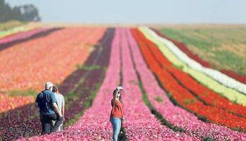 El agro israelí es uno de los más tecnificados del mundo