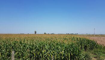 Los trabajos en el predio de AgroActiva no aflojan