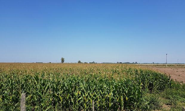 Entre el 6 y el 9 de junio de 2018 el campo argentino vivirá nuevamente la experiencia de AgroActiva la exposición a campo abierto más grande de América.