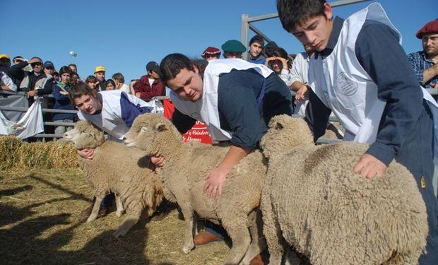 Los estudiantes esperan las Terceras Ovinpíadas de AgroActiva