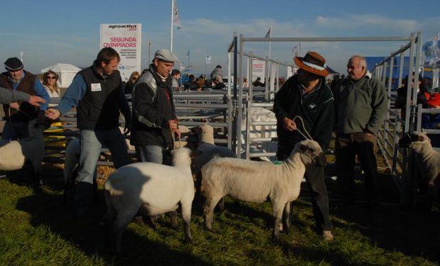 El establecimiento entrerriano El Porvenir llevará ovinos Hampshire Down y Texel. Además, exhibirá caprinos Boer.