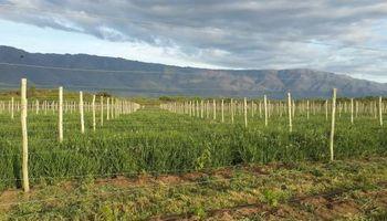 Agroecología extensiva: sustentable y productiva