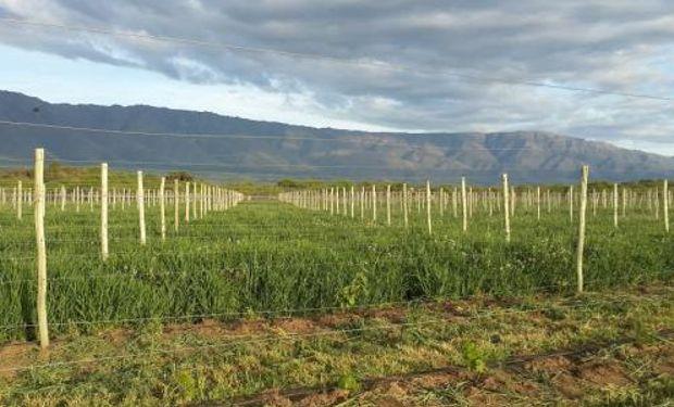 El sistema tiene plantaciones de frutales, olivos, nogales, hortalizas y pasturas, estanques para acuicultura y un tambo caprino.