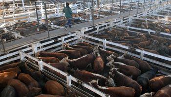 Liniers: la demanda exportadora mantuvo firme la venta de vacas y toros