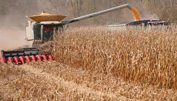 Récord: Estados Unidos va por más de 400 millones de toneladas de maíz con precios en mínimos de 10 años