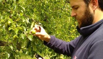 Desarrollan aplicaciones para el manejo sanitario de frutales