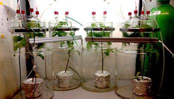 Descubren un mecanismo de defensa que las plantas utilizan frente al ataque de insectos