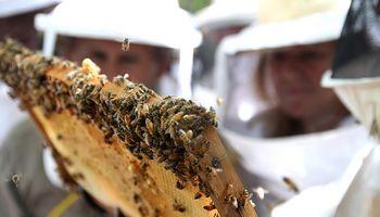 Argentina logró la apertura de los mercados de gelatina bovina, abejas y cueros a Túnez