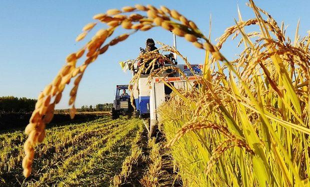 Recientemente Liag, firma que siembra en campos propios y en asociación con productores, lanzó al mercado ON por u$s15 millones.