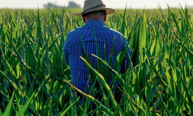 Objetivo: recopilar, analizar y difundir información sobre la productividad y el empleo agroindustrial.