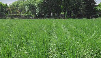 ¿Qué pastura elegir en función del suelo?