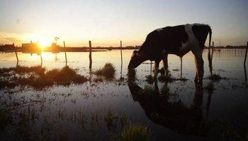 Más lluvias: cómo evitar pérdidas en el rodeo