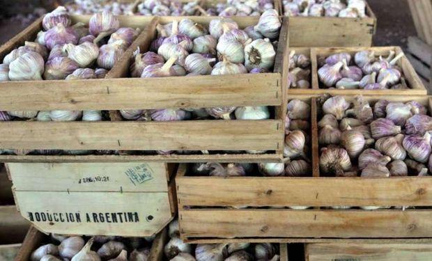 Argentina se ubica en el tercer puesto mundial de exportación de ajo (la preceden China y España) y la producción mendocina ocupa el 90% de la superficie cultivada.