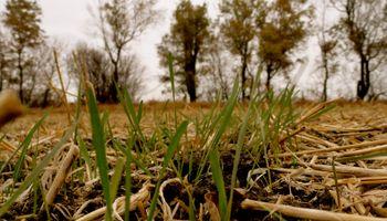 Fuerte ajuste en los planteos agrícolas