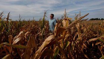 Fernández dijo que el maíz se produce en pesos, pero un 59% de los costos están dolarizados