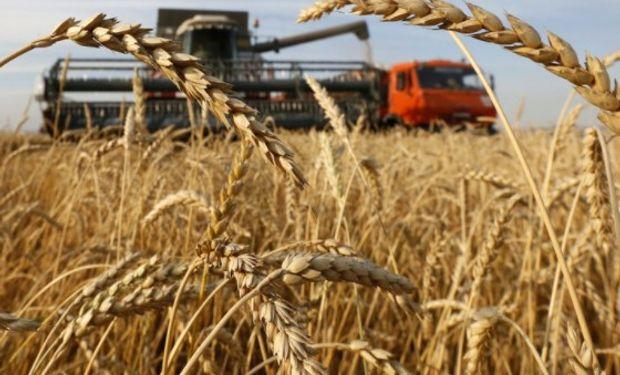 Argentina exporta 40% de su trigo a Brasil, 50% se destina al norte de África o al Sudeste de Asia, y el resto a Europa y el resto de América.