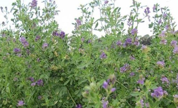 La variedad de oferta de semillas forrajeras será inferior en 2014