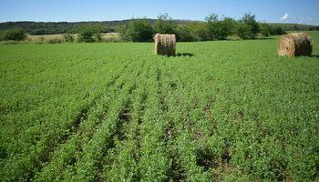 Solicitaron la inscripción de una semilla de alfalfa con mayores cualidades sanitarias