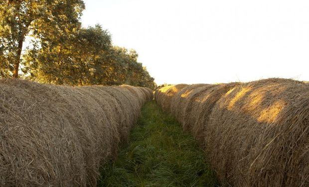 La Pampa: valor agregado a la producción local.