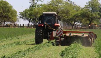 Alfalfa: cómo aumentar un 8 % su productividad