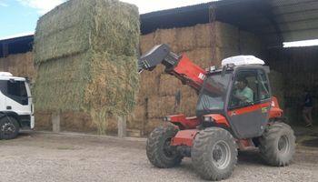 Cayeron las exportaciones argentinas de fardos de alfalfa