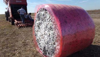 Tecnología aplicada en la cosecha del algodón para mejorar la calidad de la fibra