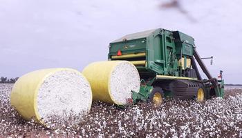 Algodón: qué empresa agropecuaria logró certificar los primeros campos de la región
