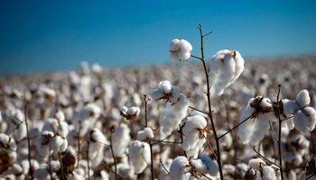Lifschitz entregó un aporte económico para expandir el cultivo de algodón