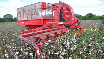 El algodón de Turquía se cosecha con máquinas argentinas
