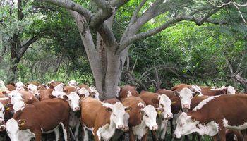Los ganaderos del pastizal