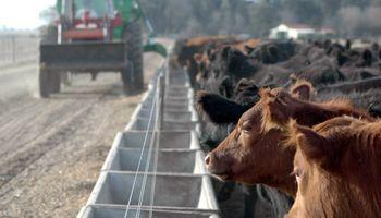 Se profundiza el debate sobre el alimento del ganado