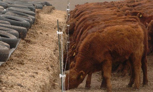 El suministro de alimento en comederos tradicionales permite reducir los riesgos de acidosis.