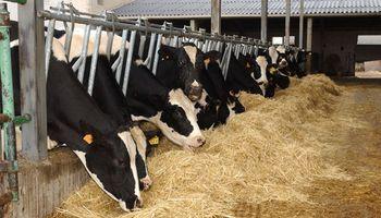 Una App permite identificar micotoxinas en el alimento del ganado