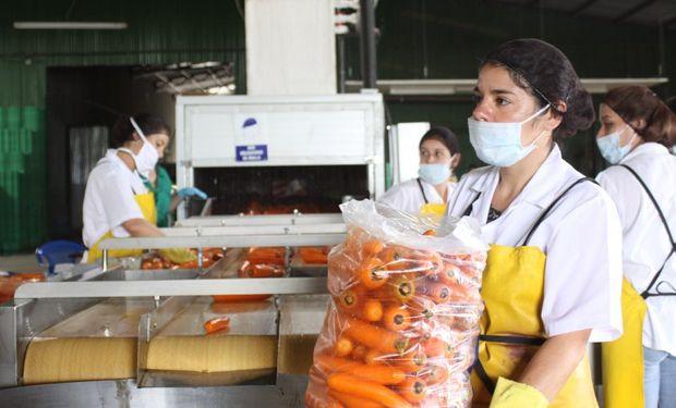Productividad agrícola debe crecer 1,75 % cada año.