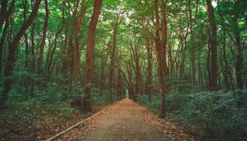Agricultura sostenible: la empresa de insumos que se unió a una tecnológica para sembrar cientos de árboles