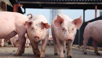 Cargill apuesta al aceite de insectos para alimentar cerdos