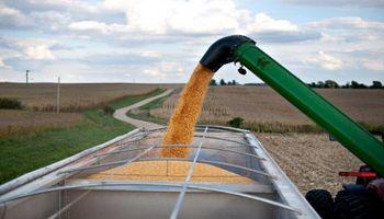 Calidad de los granos: las buenas prácticas llegan al silo