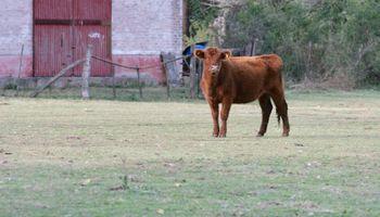 Cortes Angus certificados para promocionar la carne argentina en Estados Unidos