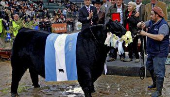 Angus vivió su día de fiesta en la Exposición Rural