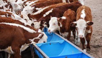 Mendoza duplicó la producción de carne bovina en 15 años