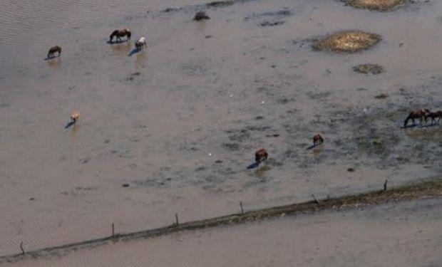 Video muestra la desesperación por salvar los animales del agua